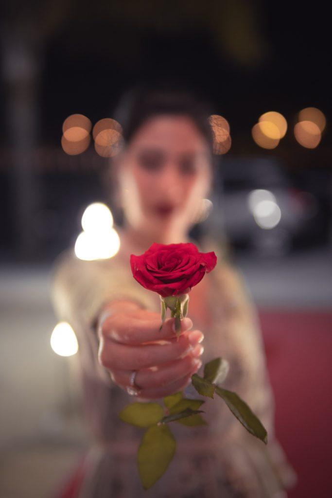 rose éternelle plan de cuques a offrir