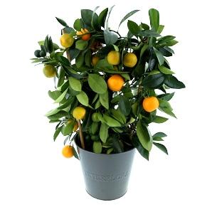 fleuriste agrumes marseille