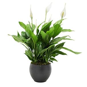 plantes fleuriste plan de cuques