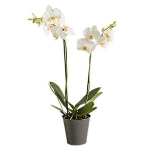 plantes marseille 13013