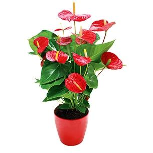 plantes marseille