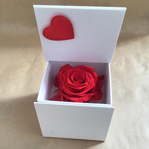 rose-eternelle-13006