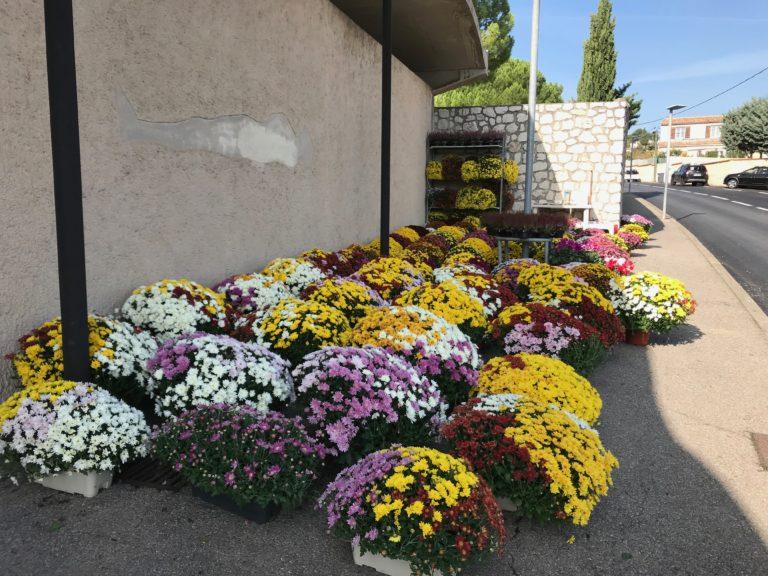 fleurs toussaint plan de cuques simone fleurs